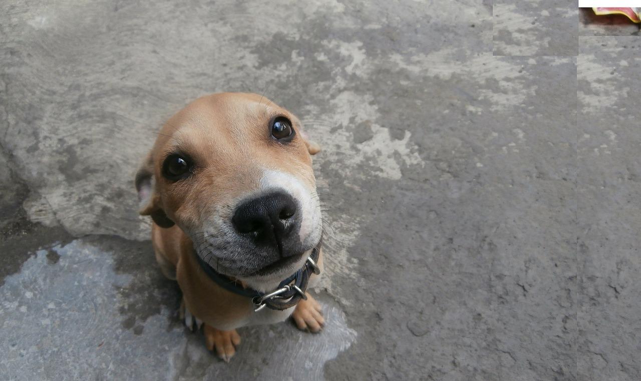 Czyste zachowanie psa w warunkach domowych